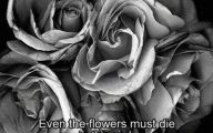 Black Flowers Lyrics 9 Wide Wallpaper