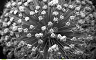 Black Flowers Meaning 29 Free Hd Wallpaper