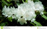 Blooming White Flowers  10 Widescreen Wallpaper