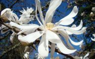 Blooming White Flowers  16 Background