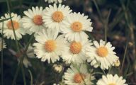 Blooming White Flowers  18 Cool Wallpaper