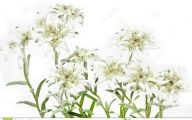 Blooming White Flowers  2 Background