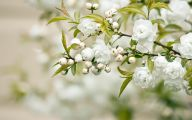Blooming White Flowers  5 Cool Wallpaper