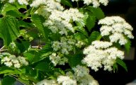 Blooming White Flowers  6 High Resolution Wallpaper