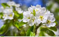 Blooming White Flowers  8 Background