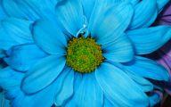 Blue Flowers 100 Widescreen Wallpaper