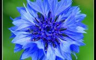 Blue Flowers 123 Wide Wallpaper