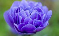 Blue Flowers 131 Wide Wallpaper