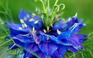 Blue Flowers 133 Desktop Wallpaper