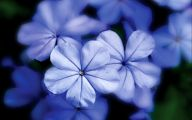 Blue Flowers 50 Desktop Background