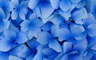 Blue Flowers 57 Background Wallpaper