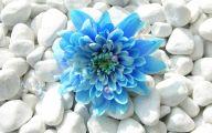 Blue Flowers 66 Wide Wallpaper