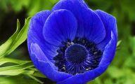 Blue Flowers 70 Hd Wallpaper