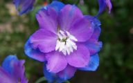 Blue Flowers 80 Background
