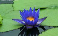 Blue Flowers Meaning 13 Free Hd Wallpaper