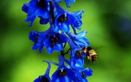 Blue Flowers Meaning 15 Background