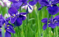 Blue Flowers Meaning 18 Background
