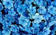 Blue Flowers Meaning 38 Background