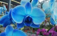 Blue Flowers Meaning 39 Free Wallpaper