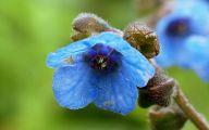 Blue Flowers Names 21 Free Hd Wallpaper