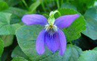 Blue Flowers Names 26 Wide Wallpaper