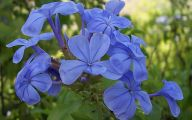 Blue Flowers Names 27 Cool Wallpaper