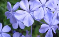 Blue Flowers Names 28 Background Wallpaper