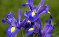 Blue Flowers Names 29 Widescreen Wallpaper