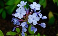 Blue Flowers Names 30 Hd Wallpaper