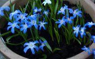 Blue Flowers Names 36 Desktop Wallpaper