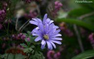 Blue Flowers Names 41 Wide Wallpaper