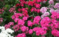 Common Pink Flowers 37 Wide Wallpaper