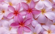 Common Pink Flowers 7 Free Wallpaper