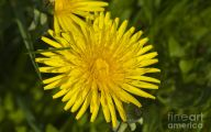 Common Yellow Flowers 1 Background Wallpaper