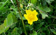 Common Yellow Flowers 15 Widescreen Wallpaper