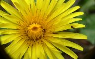 Common Yellow Flowers 19 Cool Hd Wallpaper