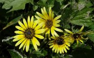 Common Yellow Flowers 24 Wide Wallpaper
