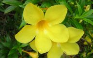 Common Yellow Flowers 26 Free Wallpaper
