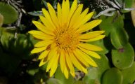 Common Yellow Flowers 29 Free Wallpaper