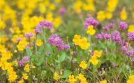 Common Yellow Flowers 5 Desktop Background