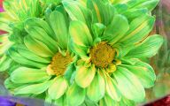 Green Flowers 101 Background