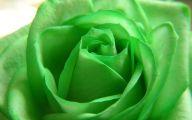Green Flowers Hd 10 Widescreen Wallpaper
