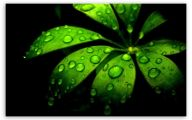 Green Flowers Hd 26 Wide Wallpaper