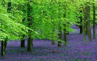 Green Flowers Hd 4 Background Wallpaper