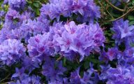 List Of Blue Colored Flowers 1 Cool Wallpaper