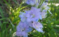List Of Blue Colored Flowers 10 Cool Hd Wallpaper