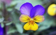 List Of Blue Colored Flowers 12 Desktop Wallpaper