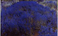 List Of Blue Colored Flowers 16 Background