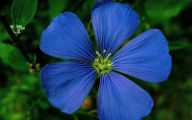List Of Blue Colored Flowers 21 High Resolution Wallpaper