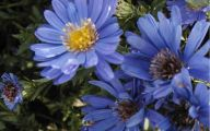 List Of Blue Colored Flowers 22 High Resolution Wallpaper
